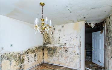 Five Boro Mold Specialist, Quality Mold Inspection, Removal