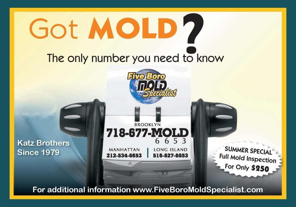 NYC mold removal services