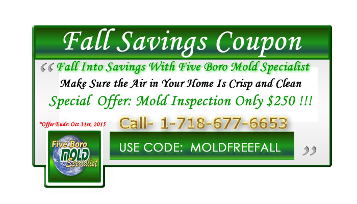five boro mold specialist nyc mold inspection fall savings coupon