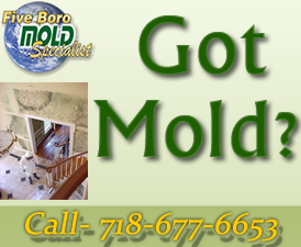 NYC-mold-inspection and mold removal process