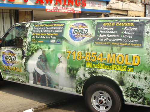 Brooklyn mold inspection NYC