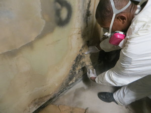 NYC mold removal
