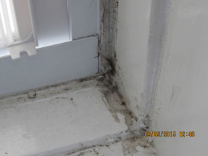 how-to deal with a mold infestation in NYC