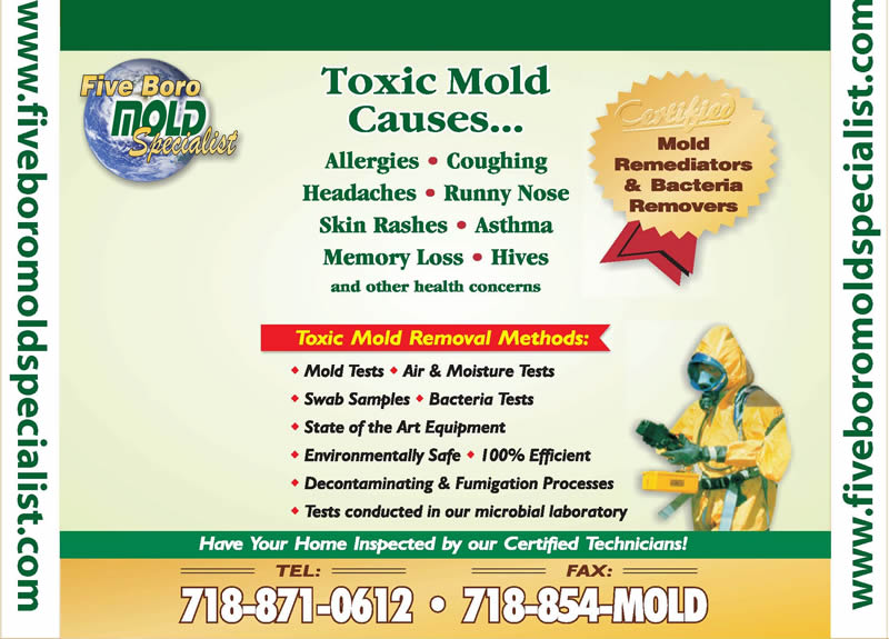 Mold infestation NYC