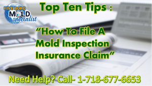 NYC mold removal insurance claim