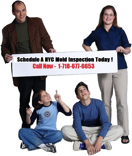 new-york-city-mold-removal-companies