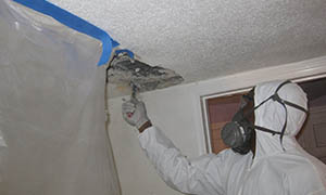 Five Boro Mold Specialist, Quality Mold Inspection, Removal & Remediation, NYC