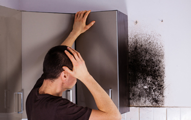 NYC Mold Specialist, NYC Mold Removal, Mold Inspection Queens, Mold Inspection New York, Mold Inspec