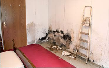 Quality Mold Inspection Manhattan, Mold Specialist Manhattan, Mold Detection Manhattan, Mold Detecti