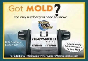 mold-and-mildew-removal-specialist